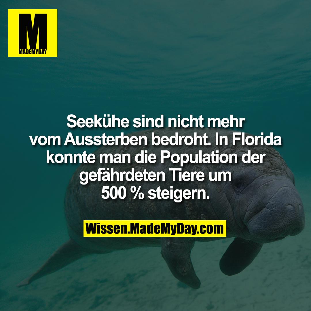 Seekühe sind nicht mehr vom Aussterben bedroht. In Florida konnte man die Population der gefährdeten Tiere um 500 % steigern.