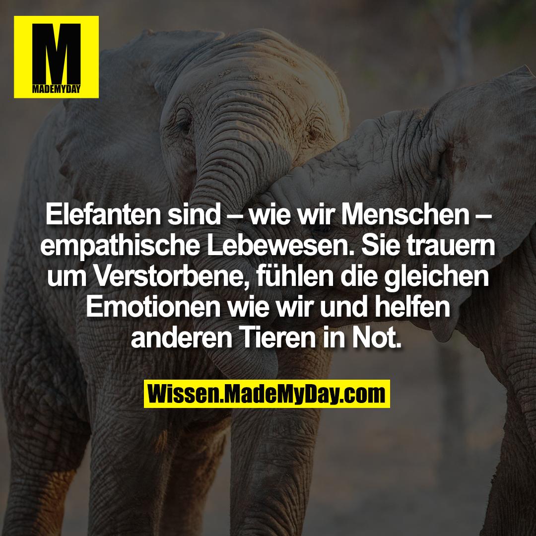 Elefanten sind – wie wir Menschen – empathische Lebewesen. Sie trauern um Verstorbene, fühlen die gleichen Emotionen wie wir und helfen anderen Tieren in Not.
