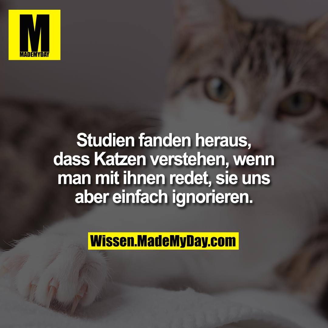 Studien fanden heraus, dass Katzen verstehen, wenn man mit ihnen redet, sie uns aber einfach ignorieren.