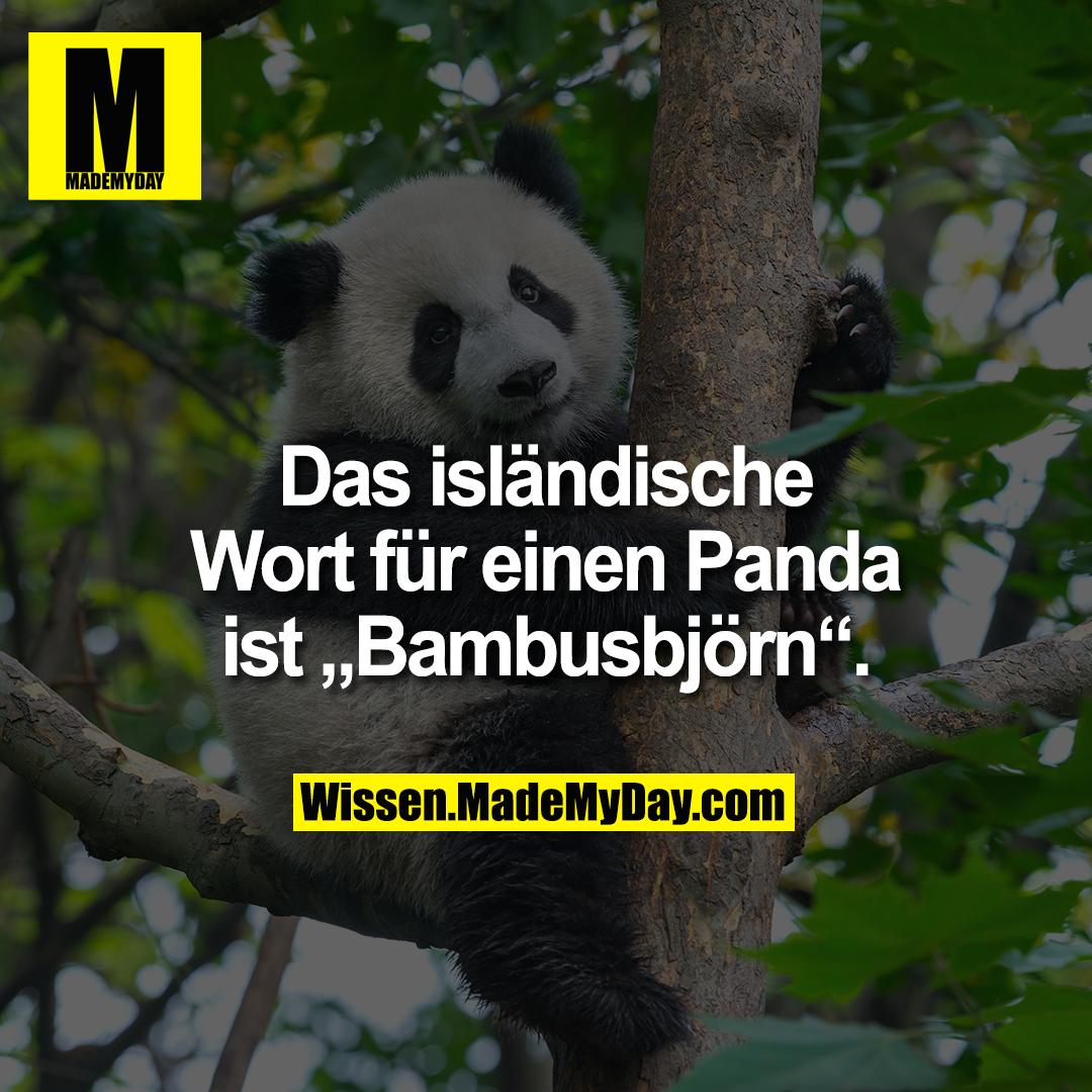 """Das isländische Wort für einen Panda ist """"Bambusbjörn""""."""