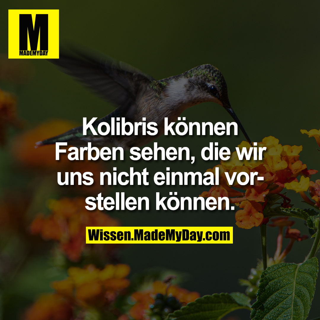 Kolibris können Farben sehen, die wir uns nicht einmal vorstellen können.