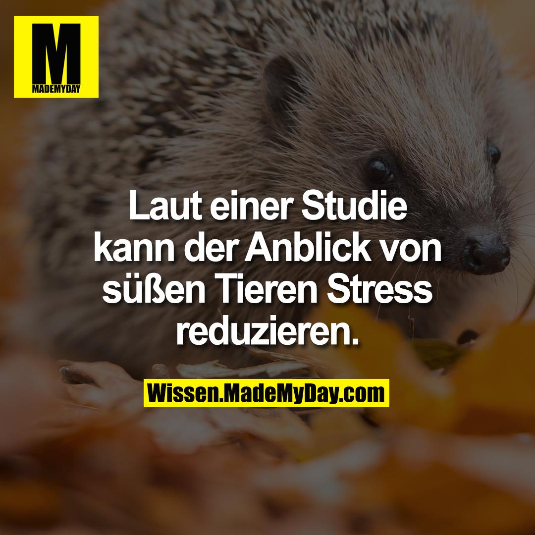 Laut einer Studie kann der Anblick von süßen Tieren Stress reduzieren.