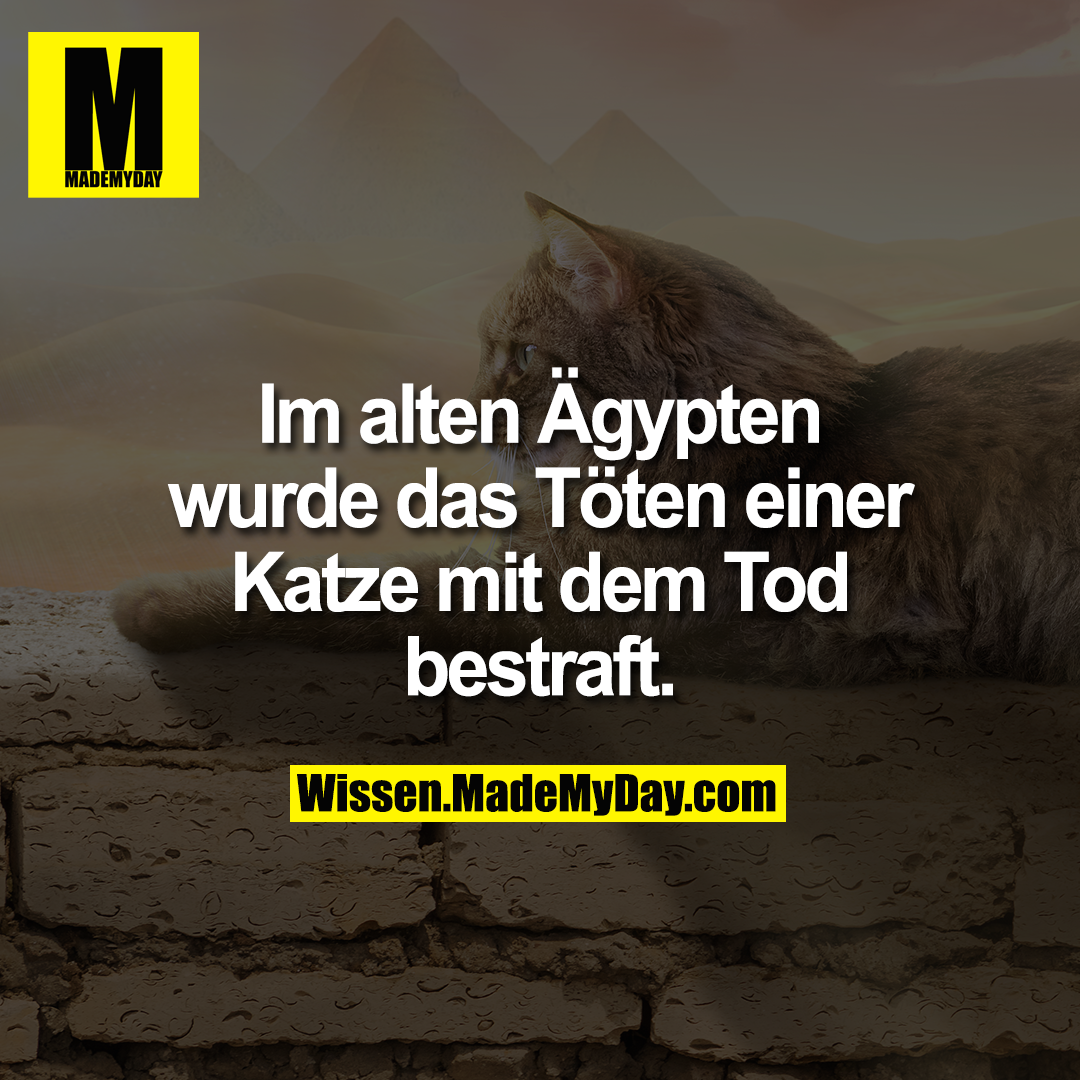 Im alten Ägypten wurde das Töten einer Katze mit dem Tod bestraft.