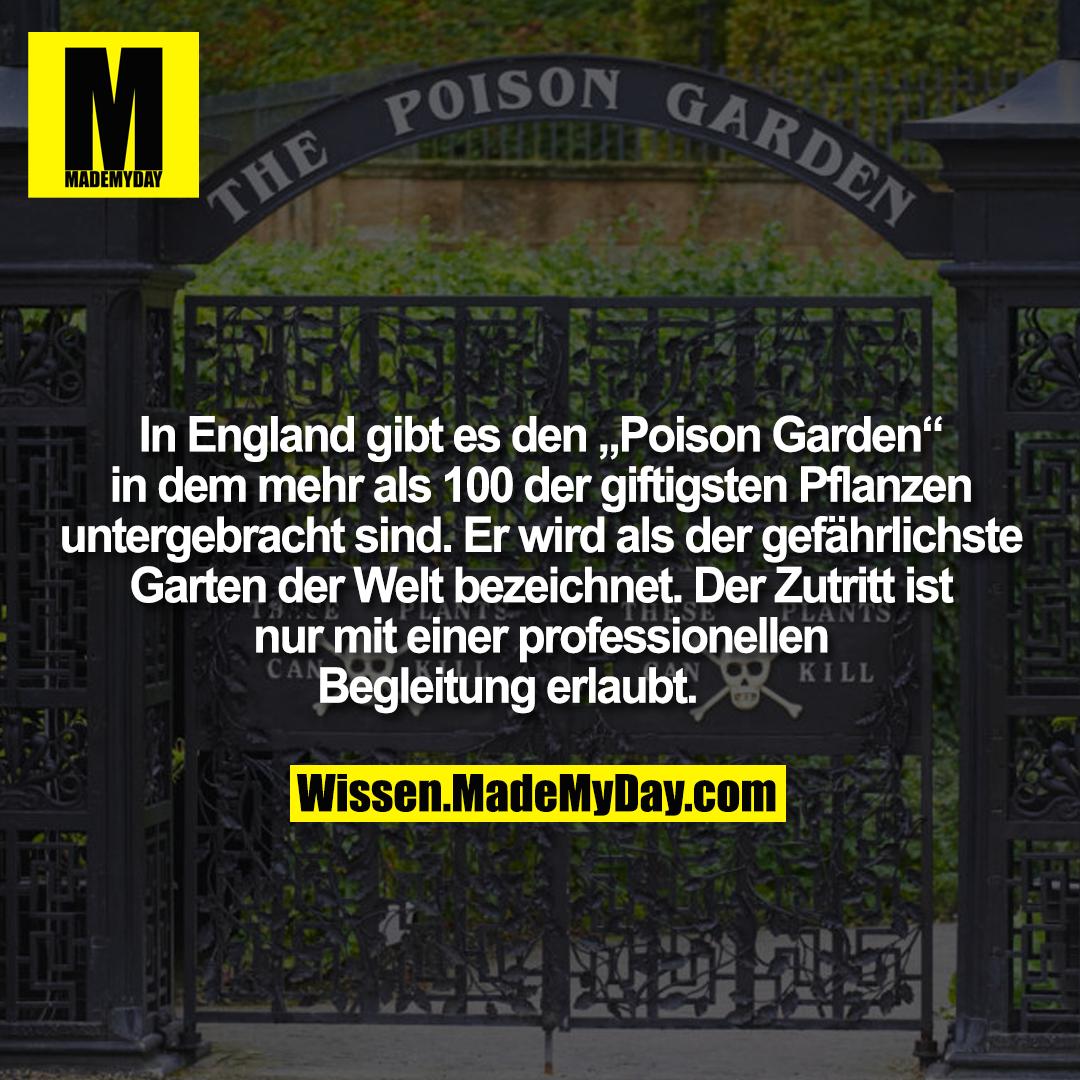 """In England gibt es den """"Poison Garden"""" in dem mehr als 100 der giftigsten Pflanzen untergebracht sind. Er wird als der gefährlichste Garten der Welt bezeichnet. Der Zutritt ist nur mit einer professionellen Begleitung erlaubt."""