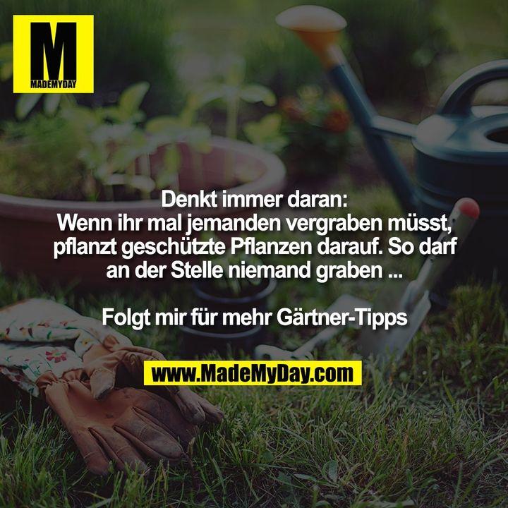 Denkt immer daran: Wenn ihr mal jemanden vergraben müsst, pflanzt geschützte Pflanzen darauf. So darf an der Stelle niemand graben ...<br /> <br /> Folgt mir für mehr Gärtner-Tipps