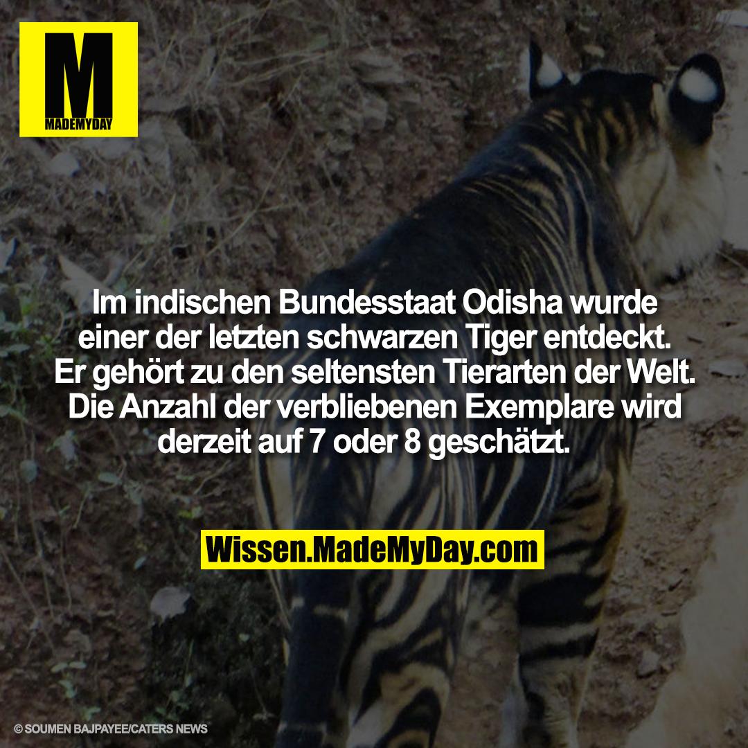Im indischen Bundesstaat Odisha wurde einer der letzten schwarzen Tiger entdeckt. Er gehört zu den seltensten Tierarten der Welt. Die Anzahl der verbliebenen Exemplare wird derzeit auf 7 oder 8 geschätzt.