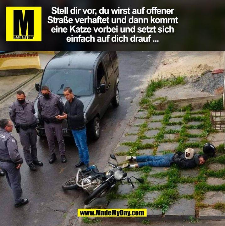 Stell dir vor, du wirst auf offener Straße verhaftet und dann kommt eine Katze vorbei und setzt sich einfach auf dich drauf ...