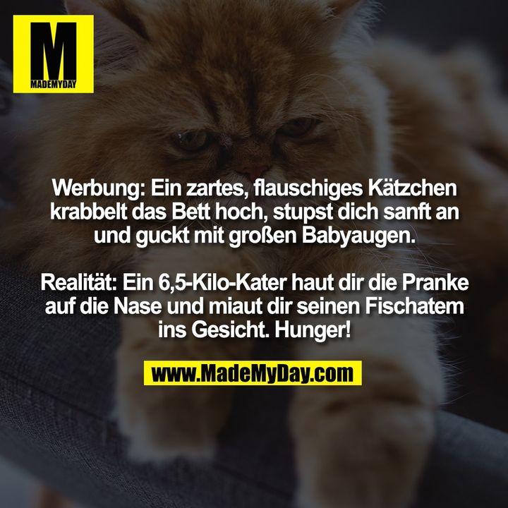 Werbung: Ein zartes, flauschiges Kätzchen krabbelt das Bett hoch, stupst dich sanft an und guckt mit großen Babyaugen. Realität: Ein 6,5-Kilo-Kater haut dir die Pranke auf die Nase und miaut dir seinen Fischatem ins Gesicht. Hunger!