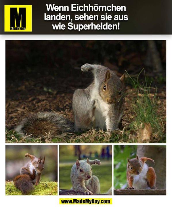 Wenn Eichhörnchen landen, sehen sie aus wie Superhelden! (BILD)
