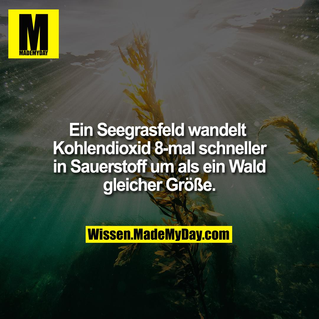 Ein Seegrasfeld wandelt Kohlendioxid 8-mal schneller in Sauerstoff um als ein Wald gleicher Größe.