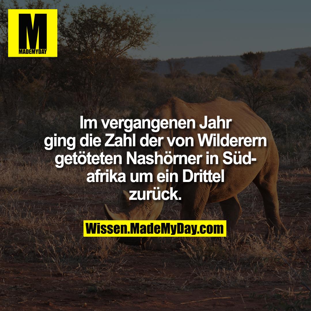 Im vergangenen Jahr ging die Zahl der von Wilderern getöteten Nashörner in Südafrika um ein Drittel zurück.