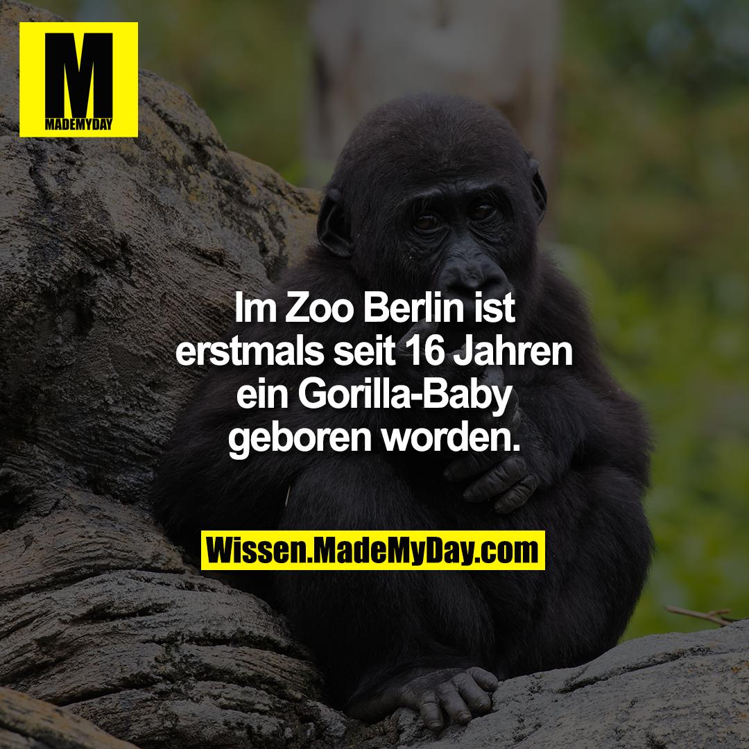 Im Zoo Berlin ist erstmals seit 16 Jahren ein Gorilla-Baby geboren worden.