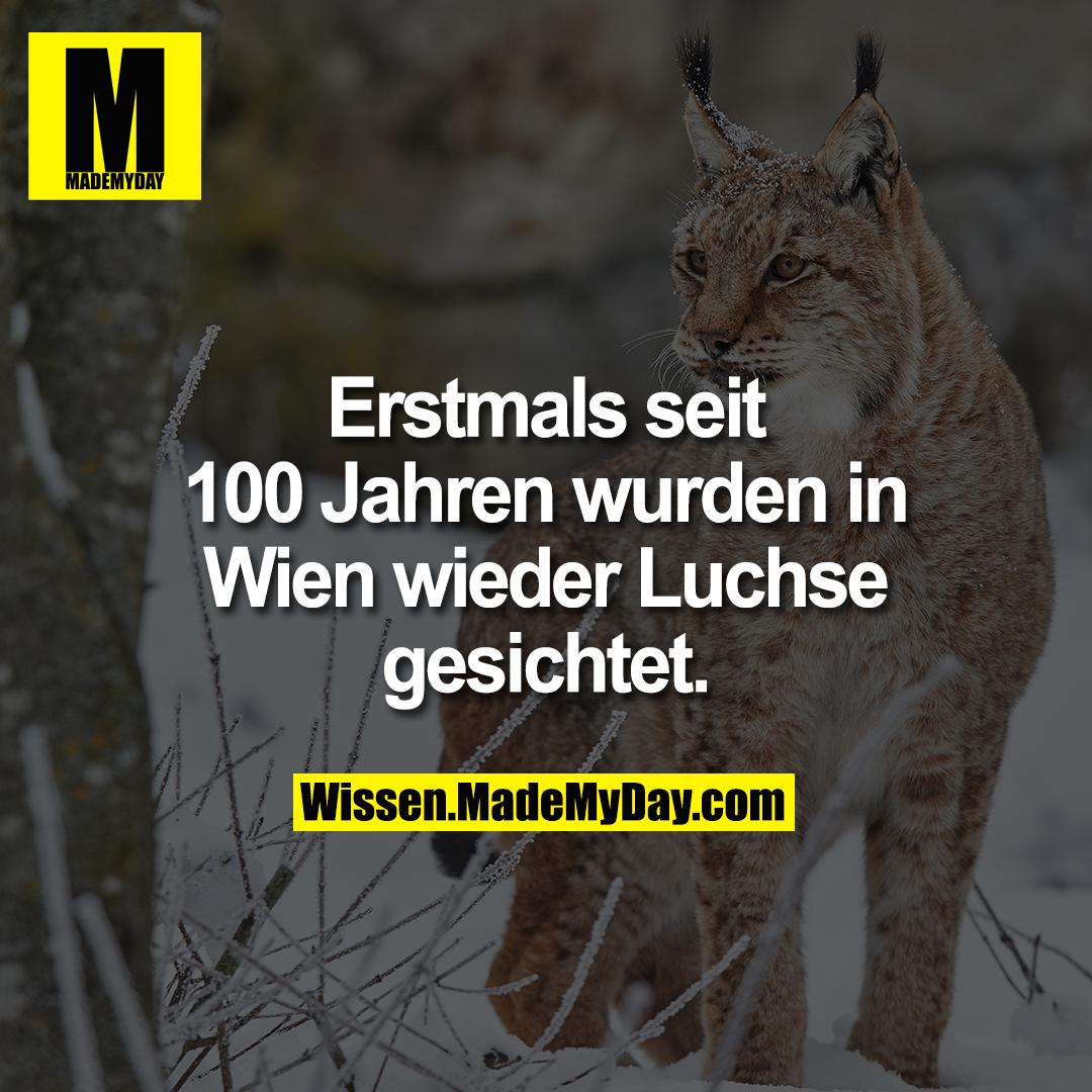 Erstmals seit 100 Jahren wurden in Wien wieder Luchse gesichtet.