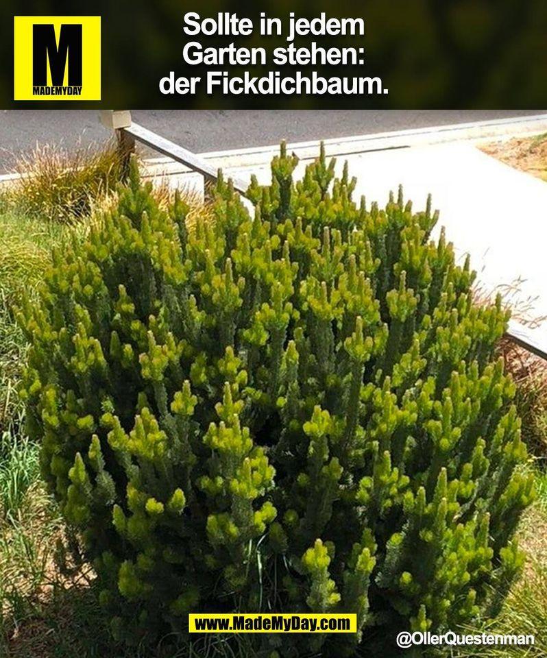 Sollte in jedem Garten stehen: der Fickdichbaum. @OllerQuestenman (BILD)