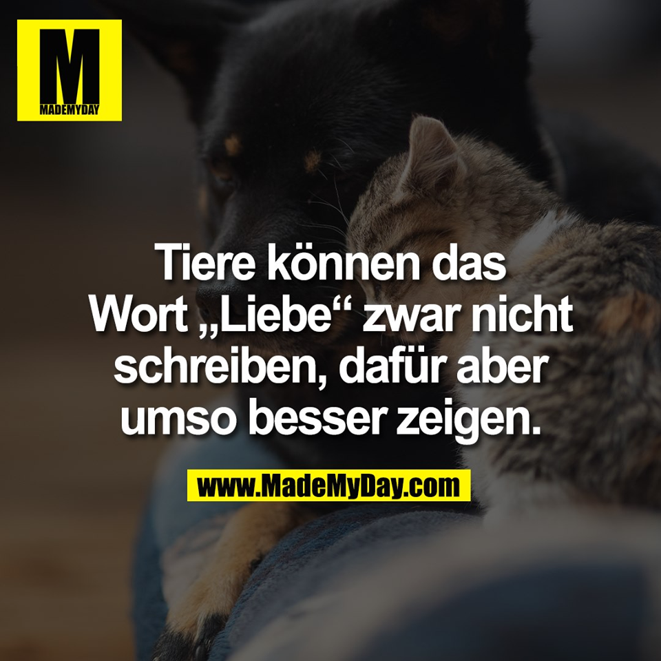 """Tiere können das<br /> Wort """"Liebe"""" zwar nicht<br /> schreiben, dafür aber<br /> umso besser zeigen."""