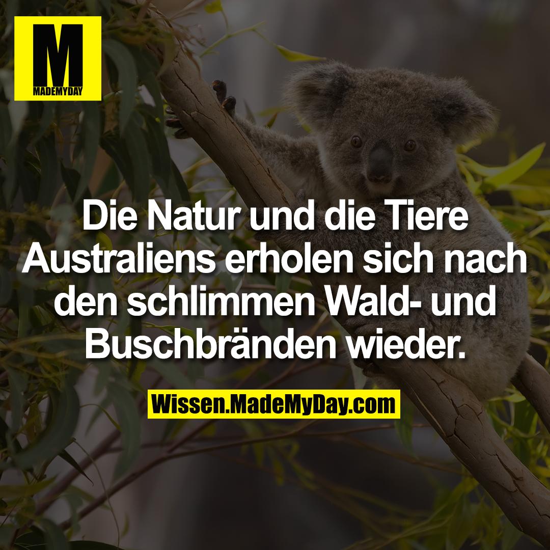 Die Natur und die Tiere Australiens erholen sich nach den schlimmen Wald- und Buschbränden wieder.