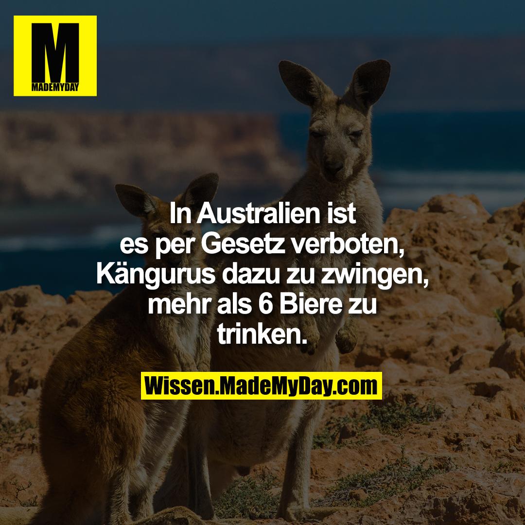 In Australien ist es per Gesetz verboten, Kängurus dazu zu zwingen, mehr als 6 Biere zu trinken.