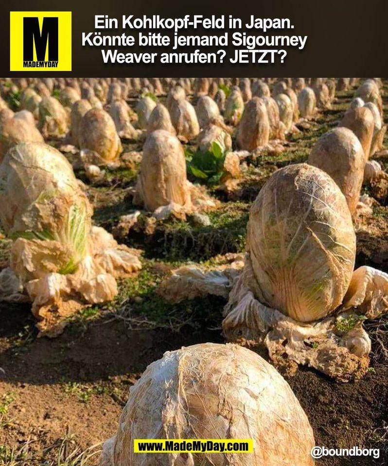 Ein Kohlkopf-Feld in Japan.<br /> Könnte bitte jemand Sigourney<br /> Weaver anrufen? JETZT? @boundborg<br /> (BILD)
