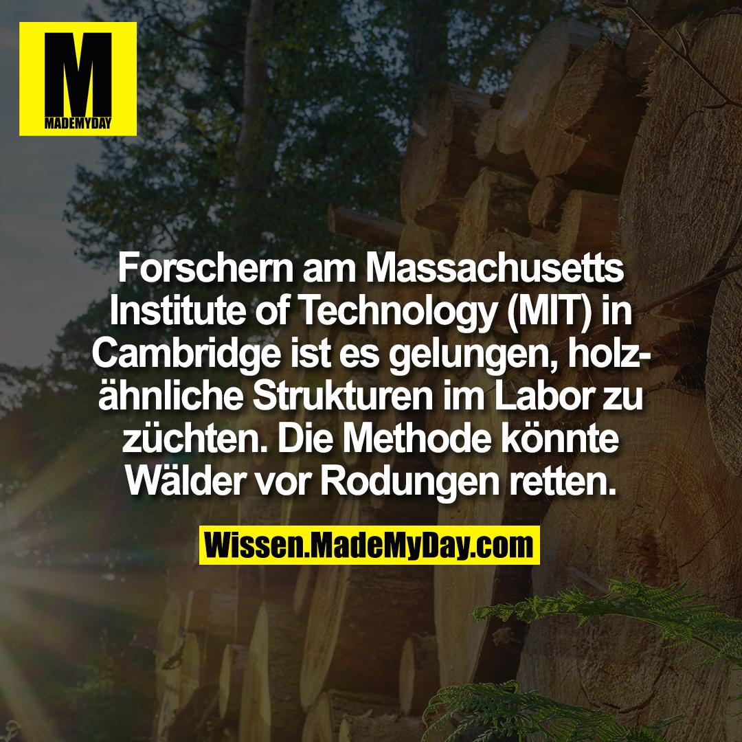 Forschern am Massachusetts Institute of Technology (MIT) in Cambridge ist es gelungen, holzähnliche Strukturen im Labor zu züchten. Die Methode könnte Wälder vor Rodungen retten.