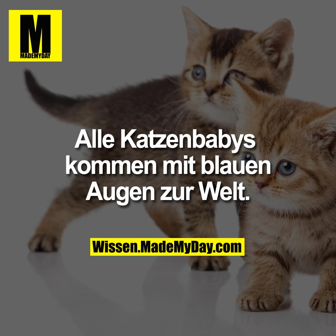Alle Katzenbabys kommen mit blauen Augen zur Welt.