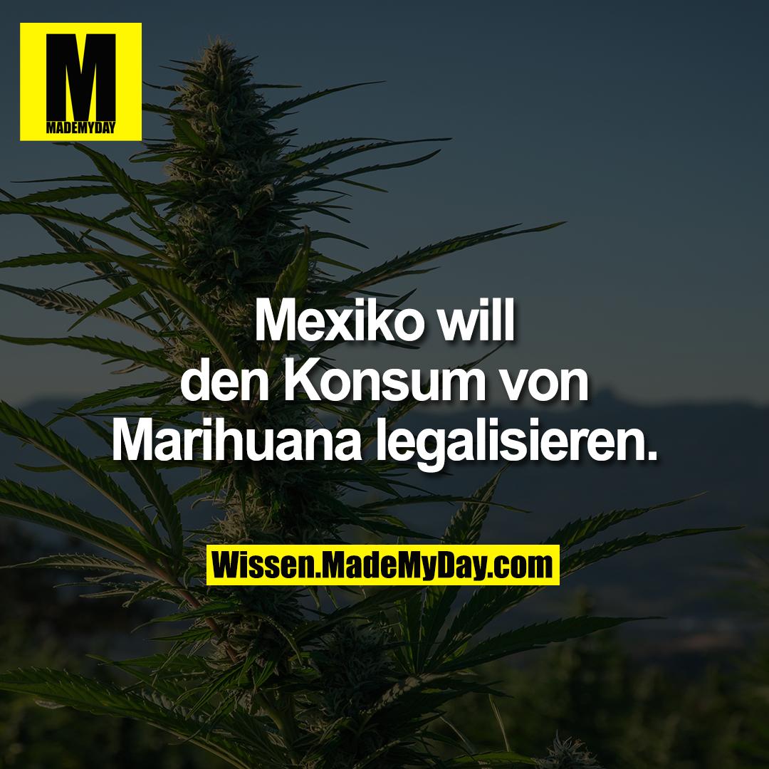 Mexiko will den Konsum von Marihuana legalisieren.