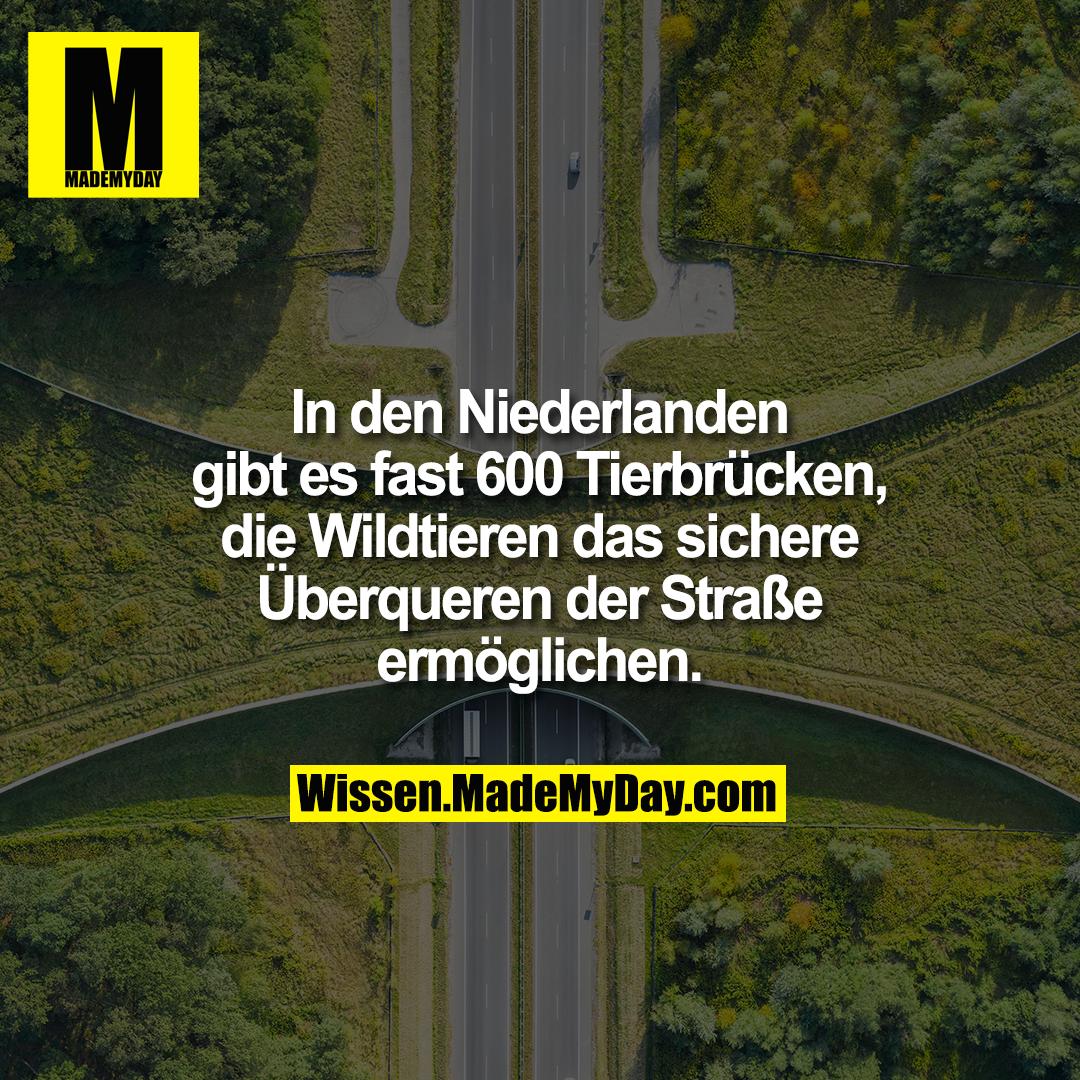 In den Niederlanden gibt es fast 600 Tierbrücken, die Wildtieren das sichere Überqueren der Straße ermöglichen.