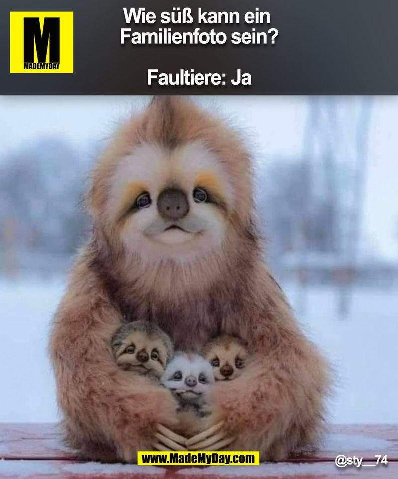 Wie süß kann ein Familienfoto sein? <br /> Faultiere: Ja<br /> @sty__74<br /> (BILD)<br />
