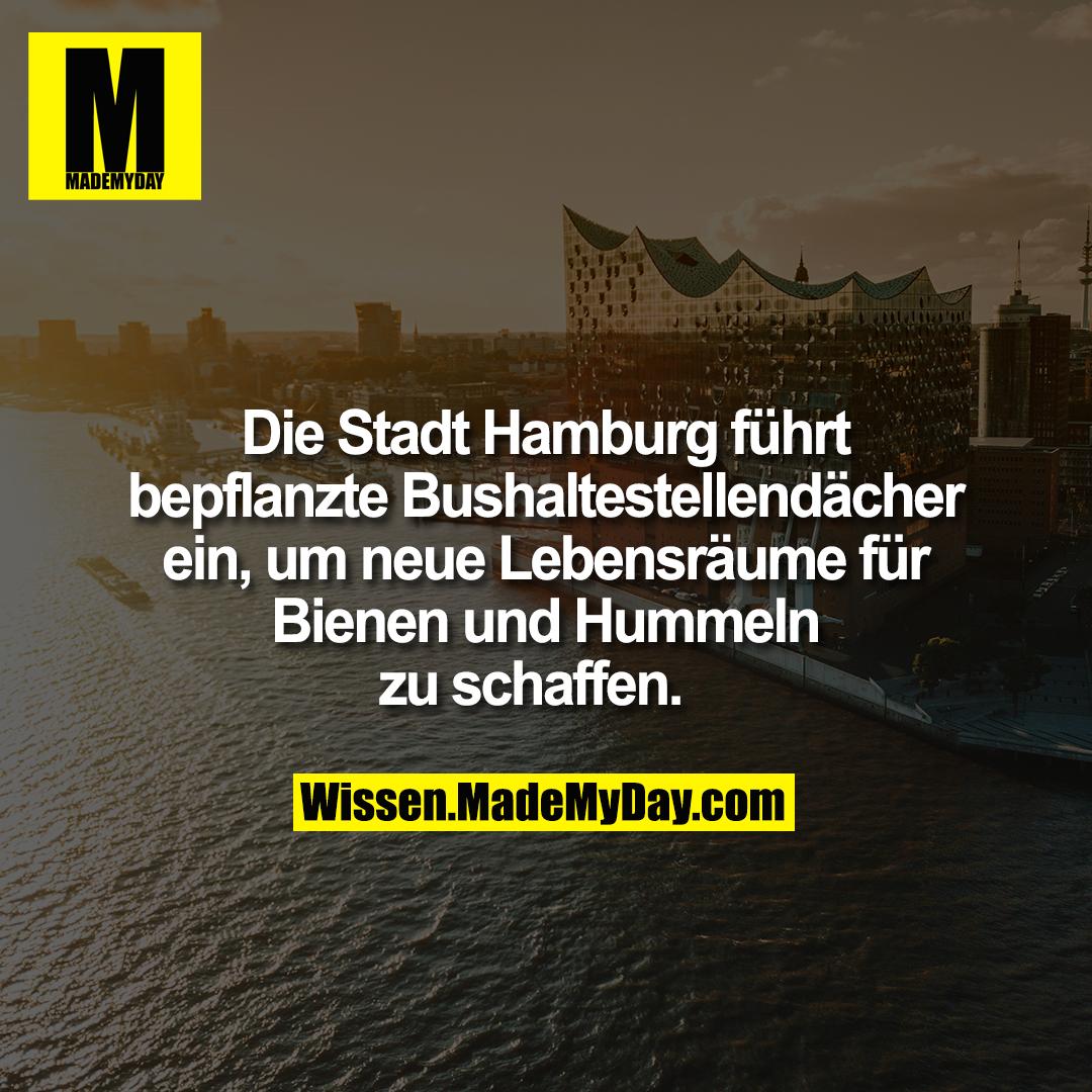 Die Stadt Hamburg führt bepflanzte Bushaltestellendächer ein, um neue Lebensräume für Bienen und Hummeln zu schaffen.
