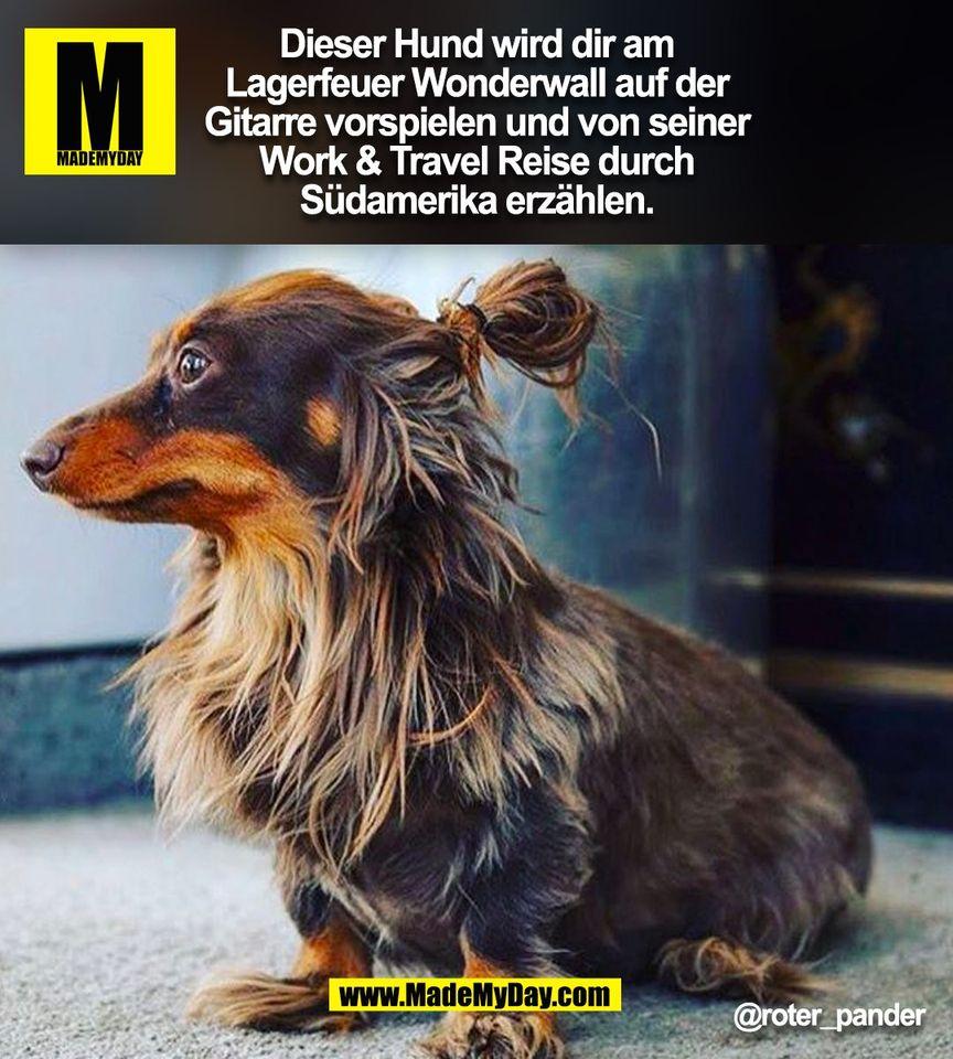 Dieser Hund wird dir am<br /> Lagerfeuer Wonderwall auf der<br /> Gitarre vorspielen und von seiner<br /> Work & Travel Reise durch<br /> Südamerika erzählen.<br /> @roter_pander<br /> (BILD)