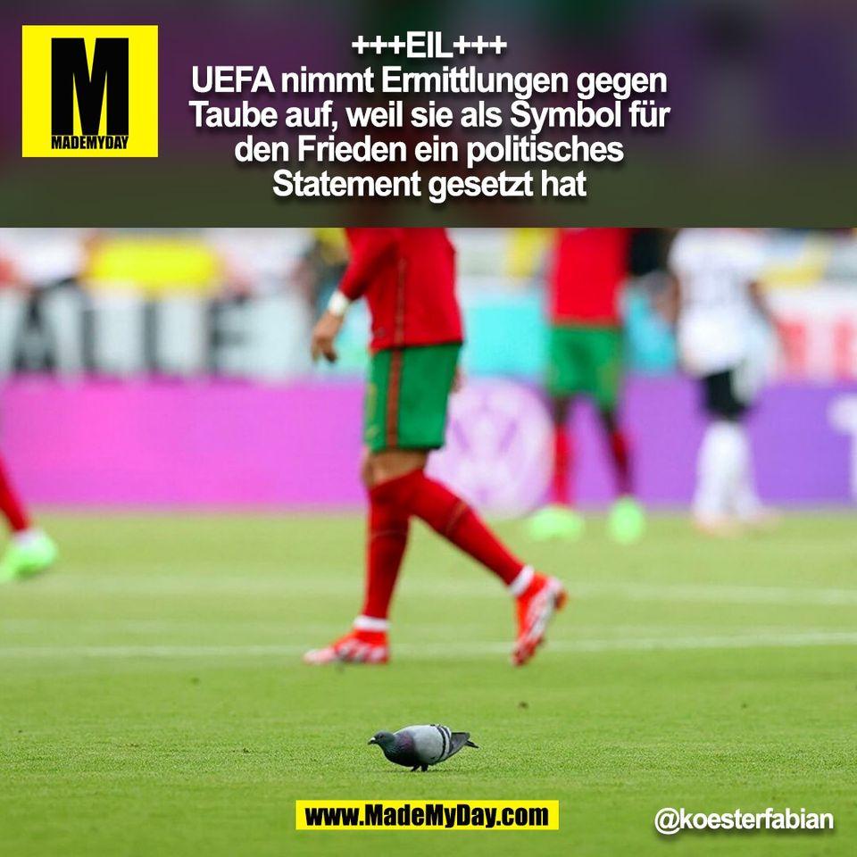 +++EIL+++<br /> UEFA nimmt Ermittlungen gegen<br /> Taube auf, weil sie als Symbol für<br /> den Frieden ein politisches<br /> Statement gesetzt hat<br /> @koesterfabian<br /> (BILD)