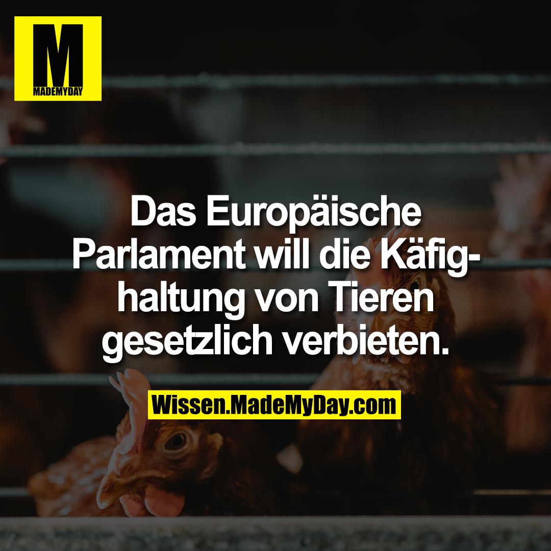 Das Europäische Parlament will die Käfighaltung von Tieren gesetzlich verbieten.