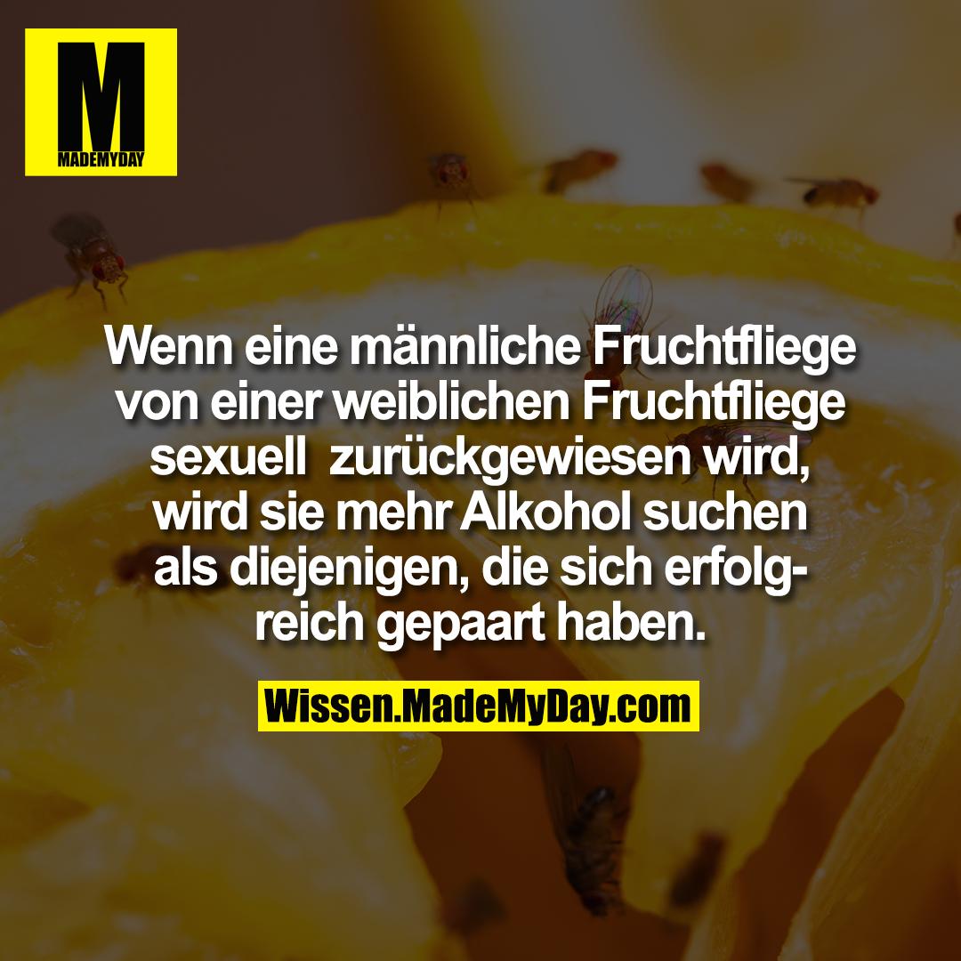 Wenn eine männliche Fruchtfliege von einer weiblichen Fruchtfliege sexuell zurückgewiesen wird, wird sie mehr Alkohol suchen als diejenigen, die sich erfolgreich gepaart haben.