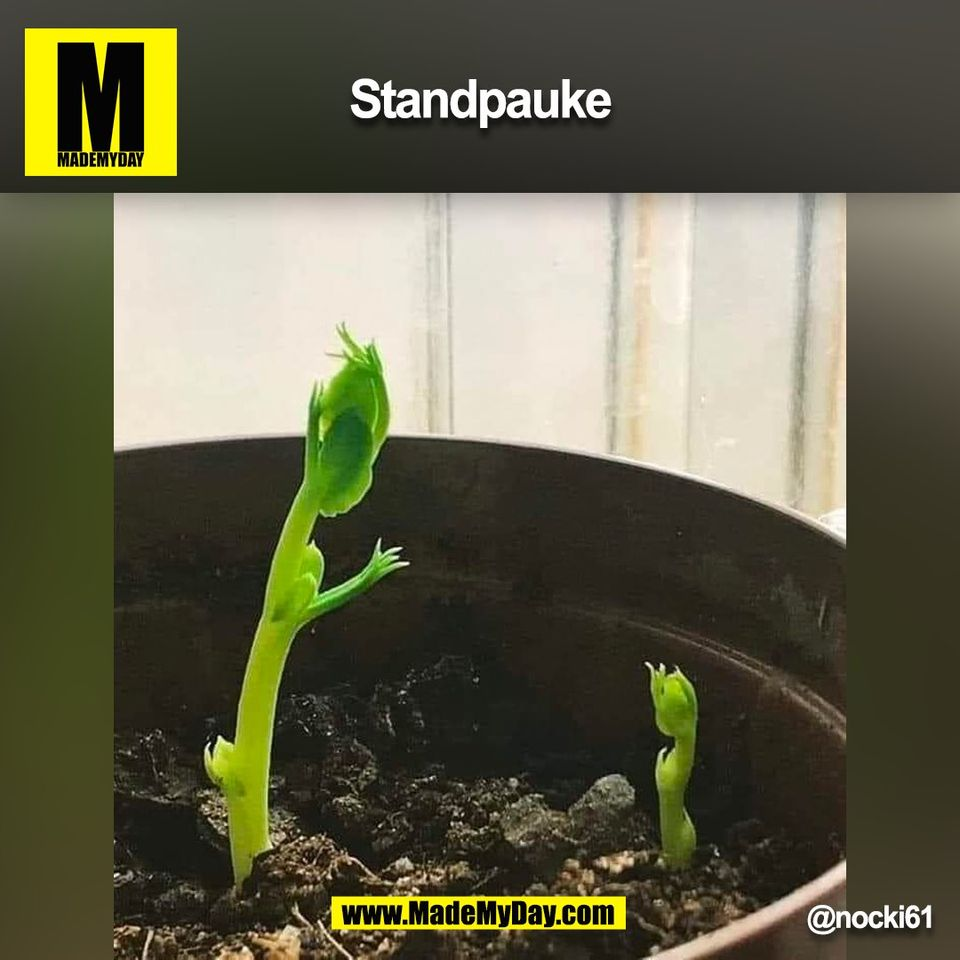 Standpauke<br /> @nocki61<br /> (BILD)