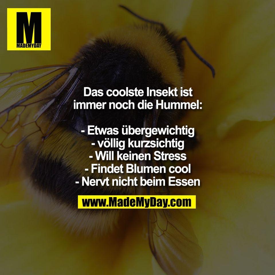Das coolste Insekt ist<br /> immer noch die Hummel:<br /> <br /> - Etwas übergewichtig<br /> - völlig kurzsichtig<br /> - Will keinen Stress<br /> - Findet Blumen cool<br /> - Nervt nicht beim Essen