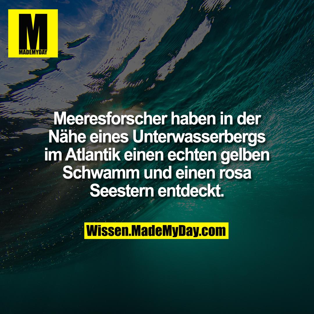 Meeresforscher haben in der Nähe eines Unterwasserbergs im Atlantik einen echten gelben Schwamm und einen rosa Seestern entdeckt.