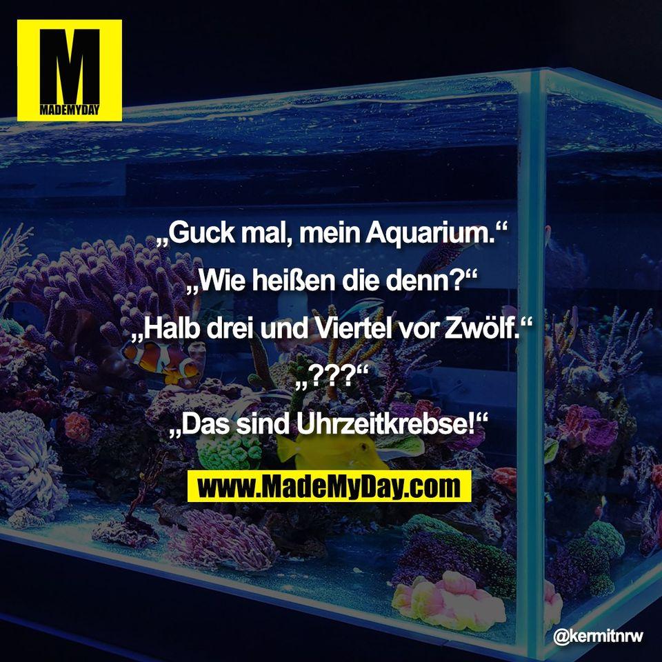 """""""Guck mal, mein Aquarium.""""<br /> <br /> """"Wie heißen die denn?""""<br /> <br /> """"Halb drei und Viertel vor Zwölf.""""<br /> <br /> """"???""""<br /> <br /> """"Das sind Uhrzeitkrebse!"""""""