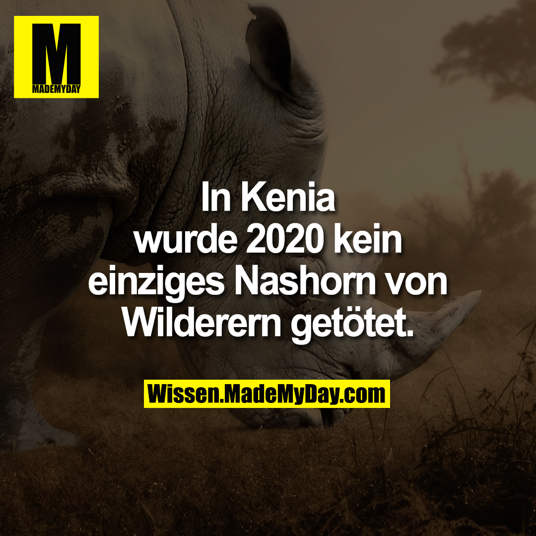 In Kenia wurde 2020 kein einziges Nashorn von Wilderern getötet.
