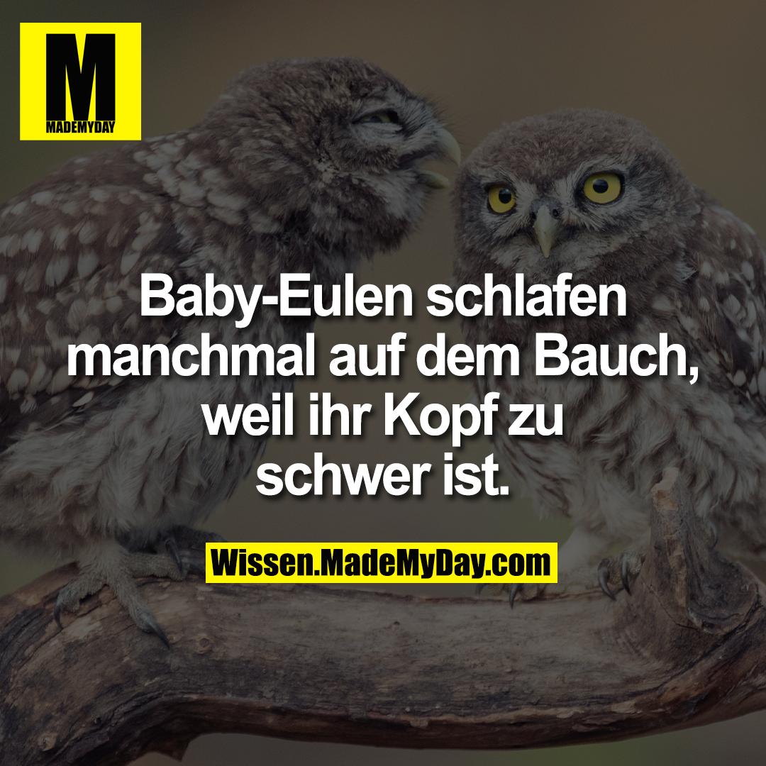 Baby-Eulen schlafen manchmal auf dem Bauch, weil ihr Kopf zu schwer ist.
