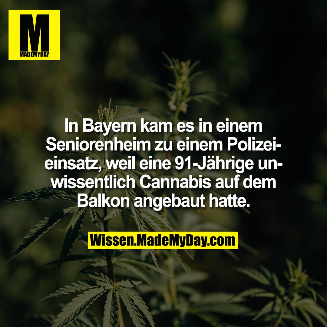 In Bayern kam es in einem Seniorenheim zu einem Polizeieinsatz, weil eine 91-Jährige unwissentlich Cannabis auf dem Balkon angebaut hatte.