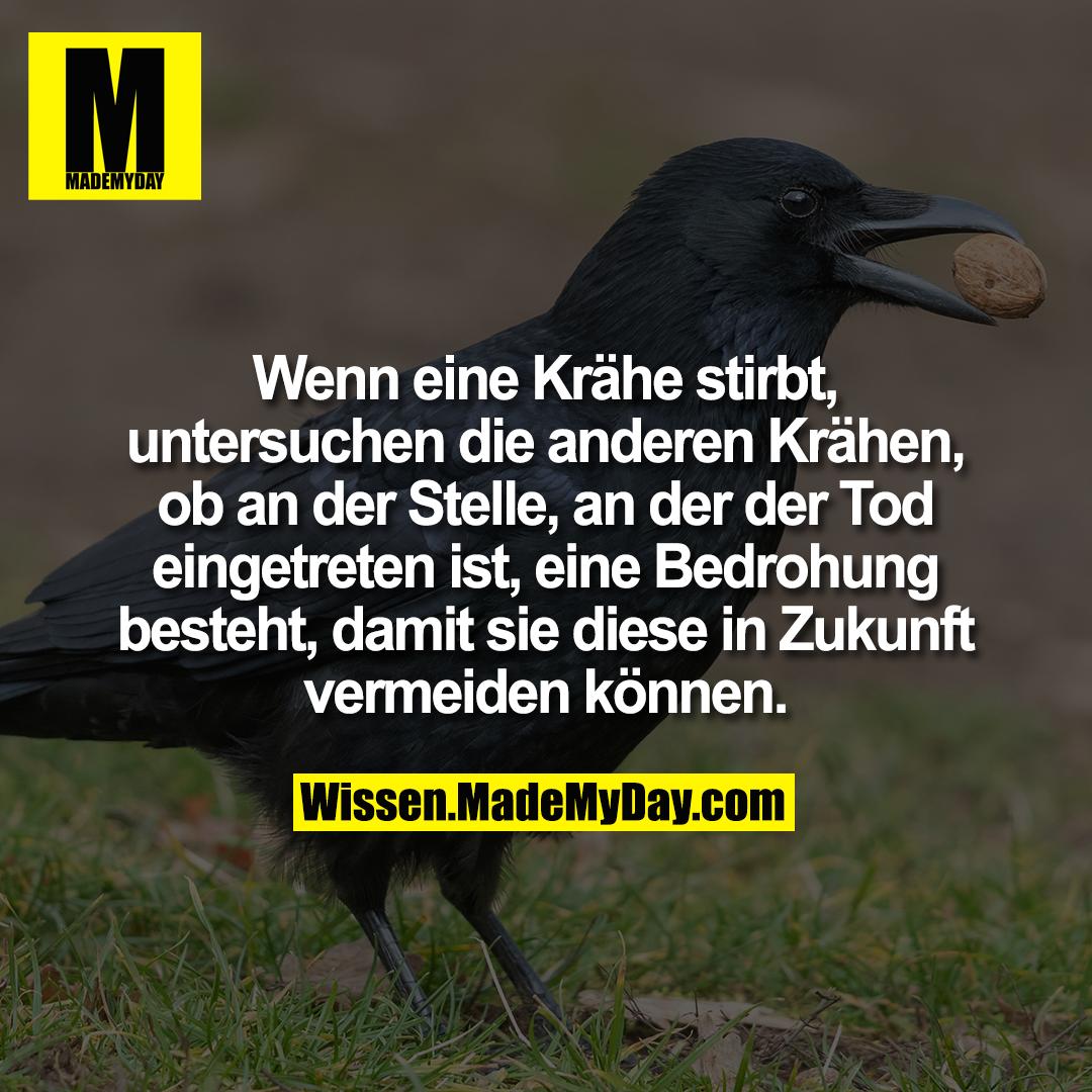 Wenn eine Krähe stirbt, untersuchen die anderen Krähen, ob an der Stelle, an der der Tod eingetreten ist, eine Bedrohung besteht, damit sie diese in Zukunft vermeiden können.