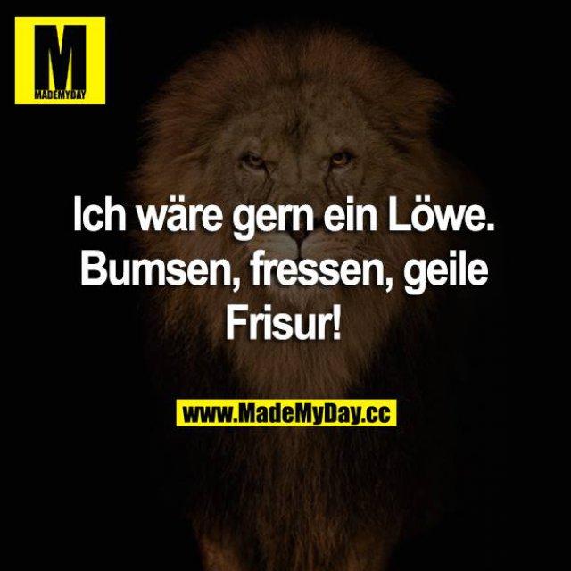 Ich wäre gern ein Löwe. Bumsen, fressen, geile Frisur!