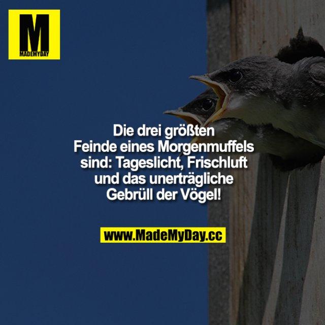 Die drei größten Feinde eines Morgenmuffels sind: Tageslicht, Frischluft und das unerträgliche Gebrüll der Vögel!