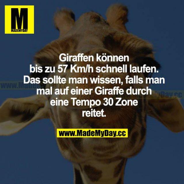 Giraffen können bis zu 557 Km/h schnell laufen. Das sollte man wissen, falls man mal auf einer Giraffe durch eine Tempo 30 Zone reitet.