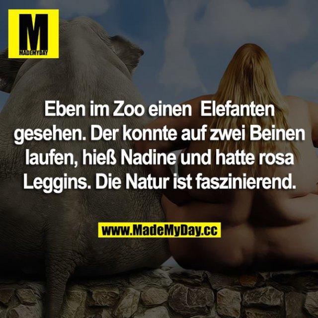 Eben im Zoo einen Elefanten gesehen. Der konnte auf zwei Beinen laufen, hieß Nadine und hatte rosa Leggins. Die Natur ist faszinierend.