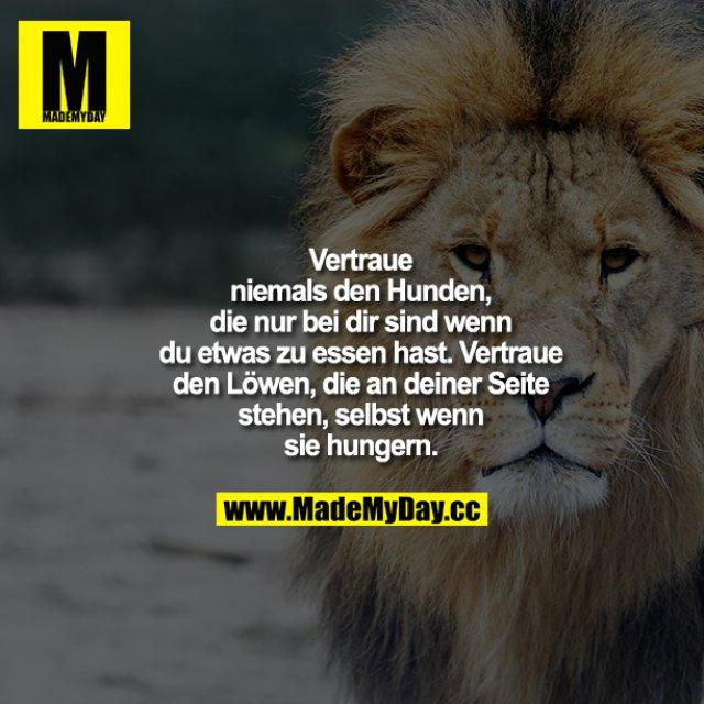 Vertraue niemals den Hunden, die nur bei dir sind, wenn du etwas zu essen hast. Vertraue den Löwen, die an deiner Seite stehen, selbst wenn sie hungern.