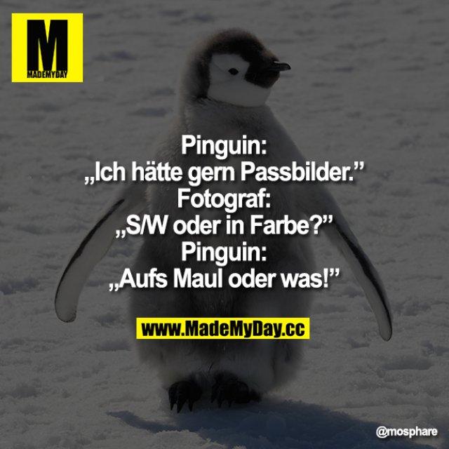 """Pinguin: """"Ich hätte gern Passbilder.""""<br /> Fotograf:""""S/W oder in Farbe?""""<br /> Pinguin:""""AufsMaul oder was!"""""""