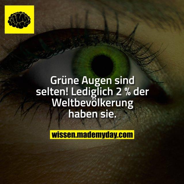 Grüne Augen sind selten! <br /> Lediglich 2 % der Weltbevölkerung haben sie.