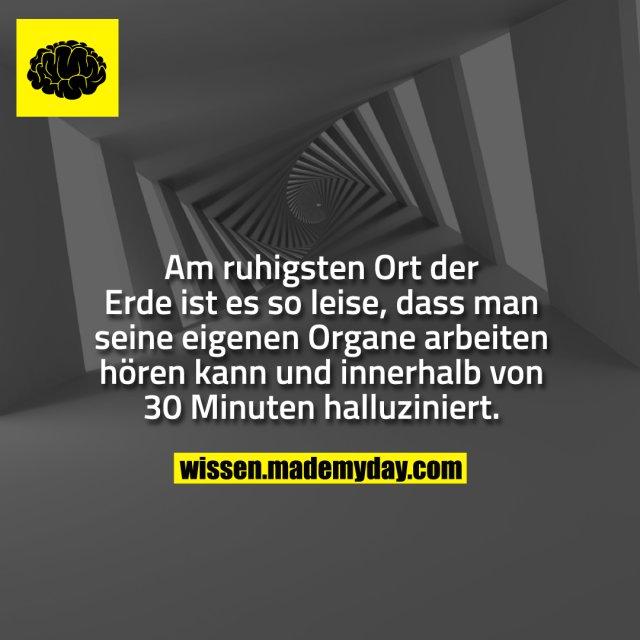 Am ruhigsten Ort der Erde ist es so leise, dass man seine eigenen Organe arbeiten hören kann und innerhalb von 30 Minuten halluziniert.