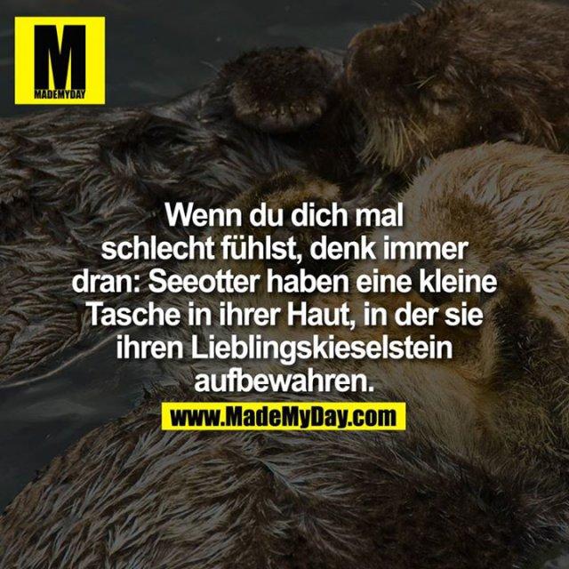 Wenn du dich mal schlecht fühlst, denk immer dran: Seeotter haben eine kleine Tasche in ihrer Haut, in der sie ihren Lieblingskieselstein aufbewahren.