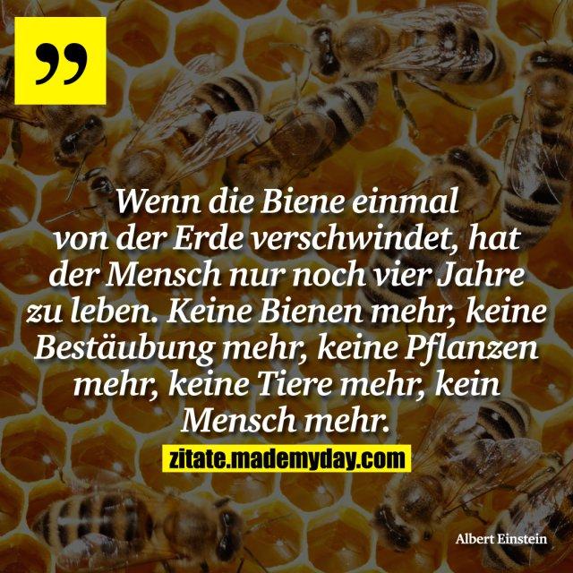 Wenn die Biene einmal von der Erde verschwindet, hat der Mensch nur noch vier Jahre zu leben. Keine Bienen mehr, keine Bestäubung mehr, keine Pflanzen mehr, keine Tiere mehr, kein Mensch mehr.